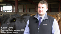 Maximising efficiency in finishing beef cattle
