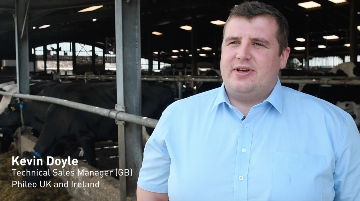 New video: Managing heat stress in dairy cows