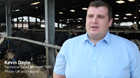 Video: Managing heat stress in dairy cows